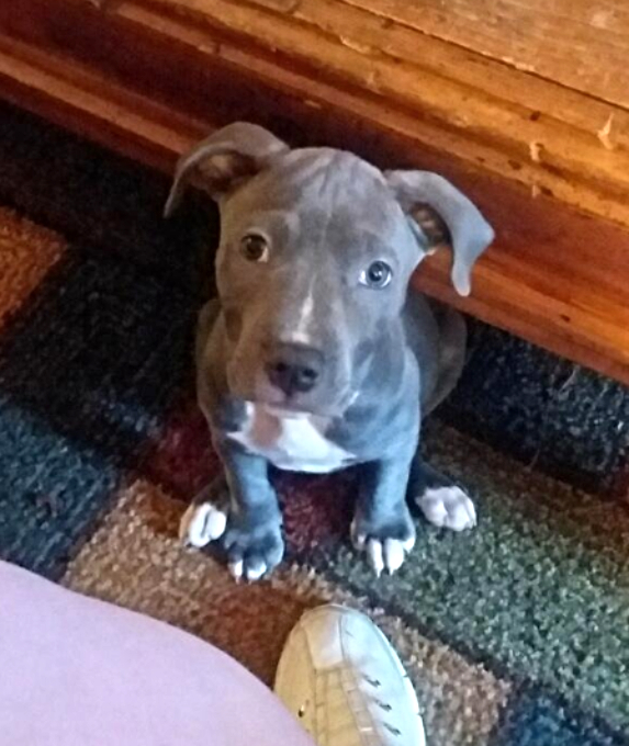Blue Puppy 2016 Pack Litter